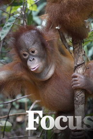 Orangutan jugle school