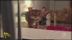 Pasticcino felino
