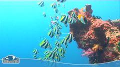 Isole Fiji thumbnail