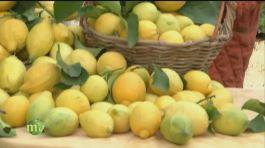 Limoni thumbnail