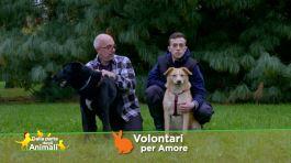 Volontari per amore thumbnail
