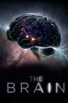 Brain - I segreti della mente umana