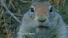 Lo scoiattolo ibernato