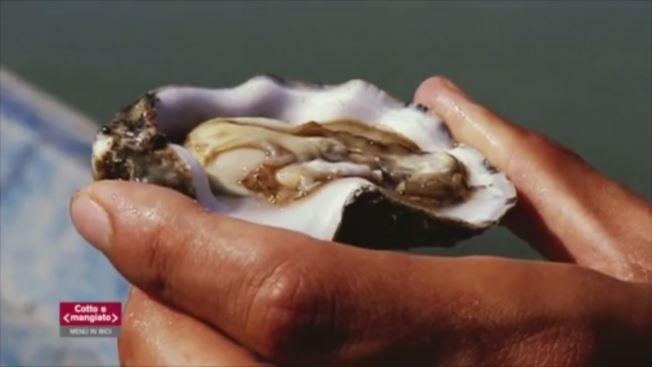 Cotto e Mangiato - Il menù: Delta del Po - Sacca di Scardovari Video