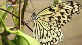 La notte delle farfalle thumbnail