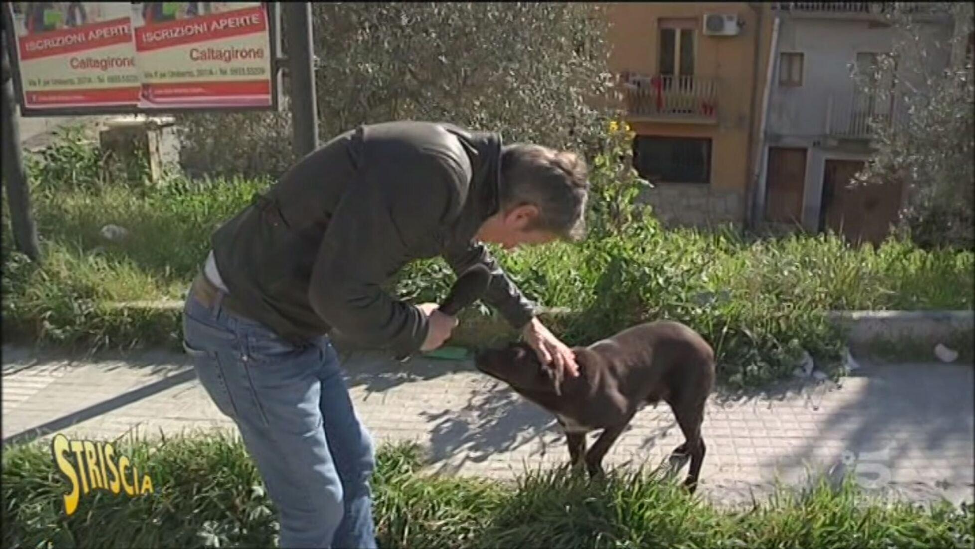 Risultato immagini per Cani randagi caltagirone