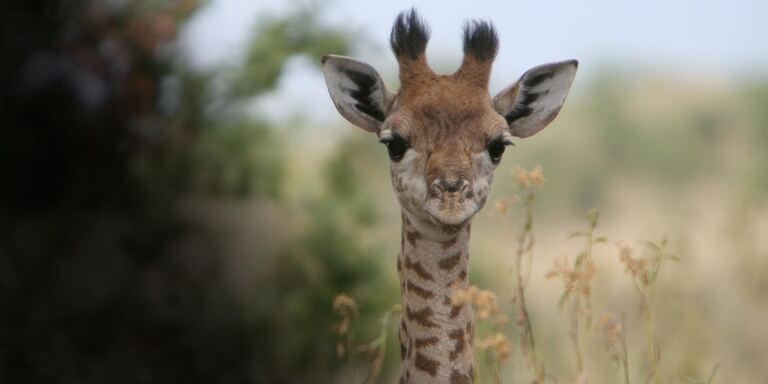 Focus Beautiful Serengeti