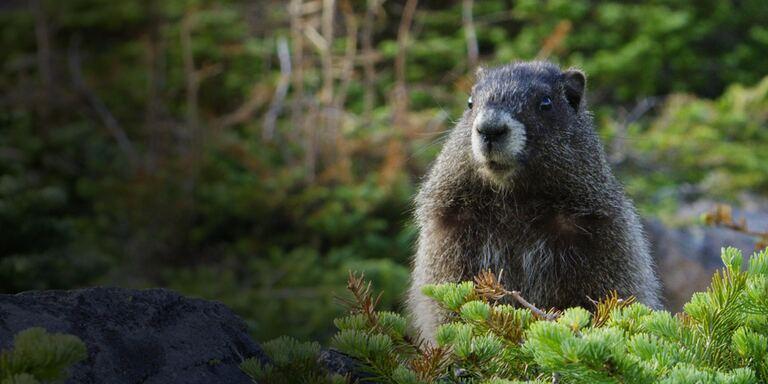 Focus Wild nord america - PrimaTv