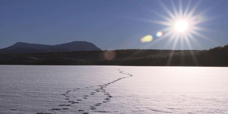 Focus Adamello: il libro di ghiaccio